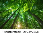 Stock photo into the forest nature composition 292597868