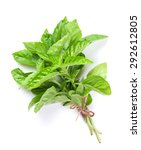 Fresh Garden Herbs. Green Basi...