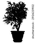 tree  flower benjamin   ficus... | Shutterstock .eps vector #292623902