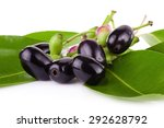jambolan plum or java plum on...   Shutterstock . vector #292628792