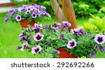 Hanging Baskets With A Petunia...