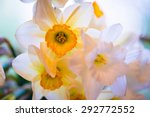 White And Yellow Easter Lilly...