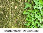 Old Cracked Mossy Tree Bark...