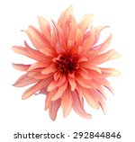Fresh Orange Dahlia Isolated O...