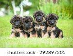 group of four little german... | Shutterstock . vector #292897205