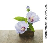 Purple Hibiscus Flowers And...
