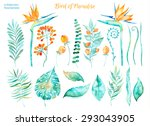 vector floral set.colorful... | Shutterstock .eps vector #293043905
