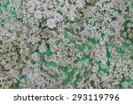 Queen Anne's Lace Wildflower O...