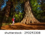 Small photo of Woman with rucksack near tree, Redwood California