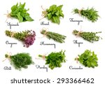 collection of cooking herbs and ... | Shutterstock . vector #293366462
