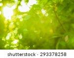 bokeh light from the sun... | Shutterstock . vector #293378258