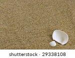 beach sand and sea shells | Shutterstock . vector #29338108