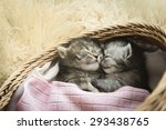 Stock photo cute tabby kittens sleeping and hugging in a basket 293438765