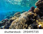 red sea coral reef with hard... | Shutterstock . vector #293495735