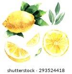 watercolor set of lemons. lemon ... | Shutterstock .eps vector #293524418