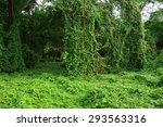 forest | Shutterstock . vector #293563316