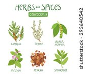 herbs and spices collection 3.... | Shutterstock .eps vector #293640542