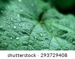 closeup of raindrops on grape... | Shutterstock . vector #293729408