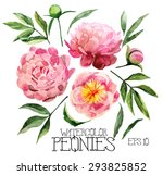 watercolor peonies set.  vector ... | Shutterstock .eps vector #293825852