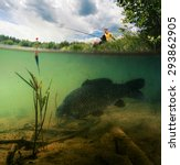 Small photo of Split shot of the freshwater pond with fisherman above the surface and big fish (Carp of the family of Cyprinidae) grazing underwater over the bottom.
