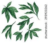 set of watercolor different... | Shutterstock .eps vector #293923262