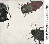 Small photo of Textured old paper background with beetles (bugs). Insects textured background (Jewel beetle -Anthaxia muliebris,Darkling Beetle - Adesmia Abbreviata (Tenebrionidae) and Scarabaeus (Copris lunaris)