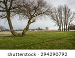 Row Of Bare Trees Against A...