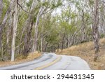eucalyptus trees  forest along... | Shutterstock . vector #294431345