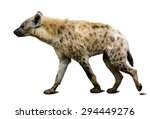spotted hyena. isolated on... | Shutterstock . vector #294449276
