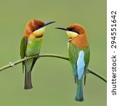 beautiful birds chestnut headed ...   Shutterstock . vector #294551642
