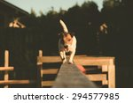 Stock photo jack russell terrier walking on a beam 294577985