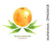 watercolor vector grapefruit | Shutterstock .eps vector #294626618