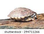 turtle   Shutterstock . vector #294711266