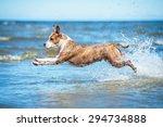 american staffordshire terrier... | Shutterstock . vector #294734888