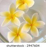frangipani flowers in water | Shutterstock . vector #2947604
