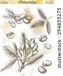 pistachios set of vector... | Shutterstock .eps vector #294855275