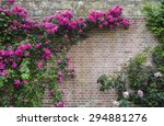 climbing flowers in the... | Shutterstock . vector #294881276