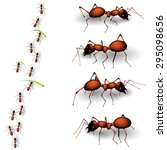 collection of forest ants...