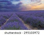 lavender field under blue sky... | Shutterstock . vector #295103972