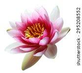 lotus flower isolated on white | Shutterstock . vector #295208552