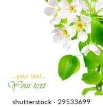 pear blossoms border | Shutterstock . vector #29533699