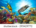 colorful coral reef with many... | Shutterstock . vector #295429772