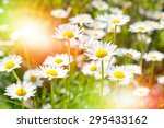 Summer Meadow Of Daisies