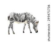 hand painted watercolor zebra.... | Shutterstock .eps vector #295471736