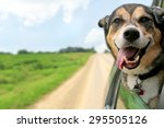 Stock photo a happy german shepherd mix breed dog is hanging is tongue out of his mouth with his ears blowing 295505126