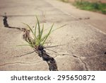 grass on road cracks  | Shutterstock . vector #295650872