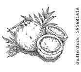 coconut   Shutterstock .eps vector #295681616