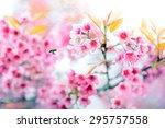 pink cherry blossom   sakura... | Shutterstock . vector #295757558