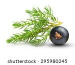 juniper isolated on white... | Shutterstock . vector #295980245