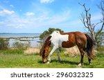 Horse At Assateague Island